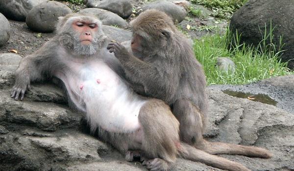Computer benadert herkenningsniveau aap