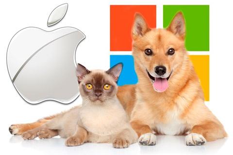 apple-cat-ms-dog