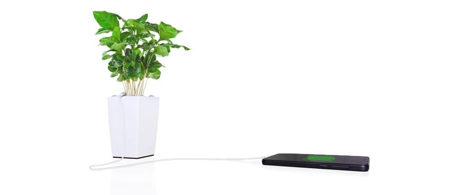 Planten laden smartphones op met de Bioo-bloempot