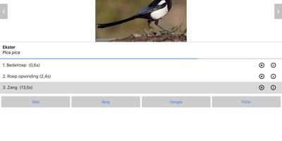 Vogelzang - Van  'tjilp, tjilp' tot 'kra, kra' en alles ertussenin