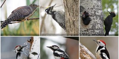 iNaturalist - Leer dier- en plantensoorten kennen
