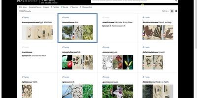 Plants of the Worlds - Een groeiende online plantendatabase