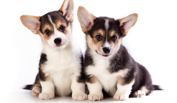 Dierenbescherming zet dating-app in voor hondenadoptie