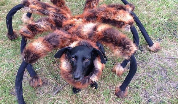 YouTube-sensaties 2014: Buigende iPhone 6 en verklede hond