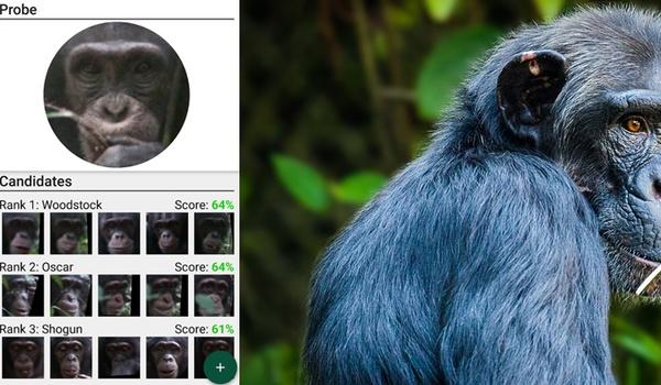 Gezichtsherkenning redt bedreigde apensoorten