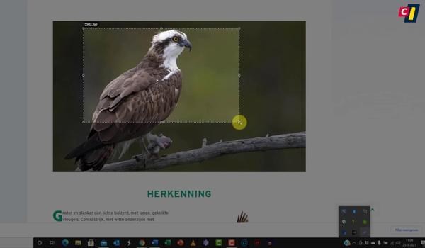 Screenshots maken met LightShot
