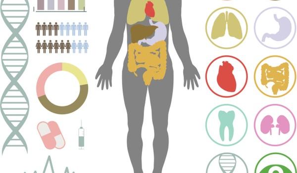 Google brengt menselijk lichaam in kaart