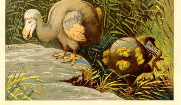 Nieuwe dodo-expeditie online te volgen