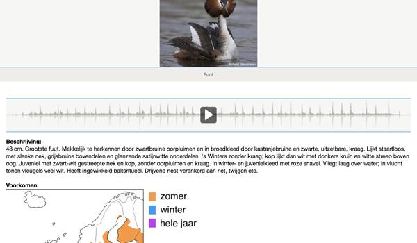Vogels van Europa 2.0 - Kijk, wat vliegt daar? Hoor, wat tjilpt daar?