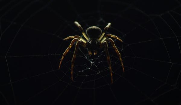 Extra ogen op het dark web door cybervrijwilligers