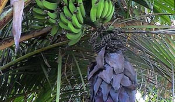 Databank van planten biedt hulp bij tuinieren
