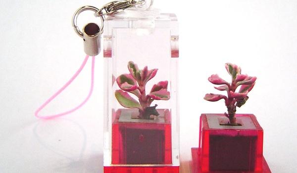 Het nieuwste gsm-hebbeding is een...plant!