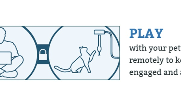 Dierenopvang laat je met katten spelen via webcam