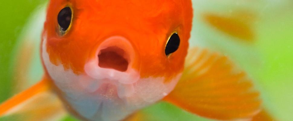 'Minder concentratievermogen dan goudvis door opkomst smartphones'
