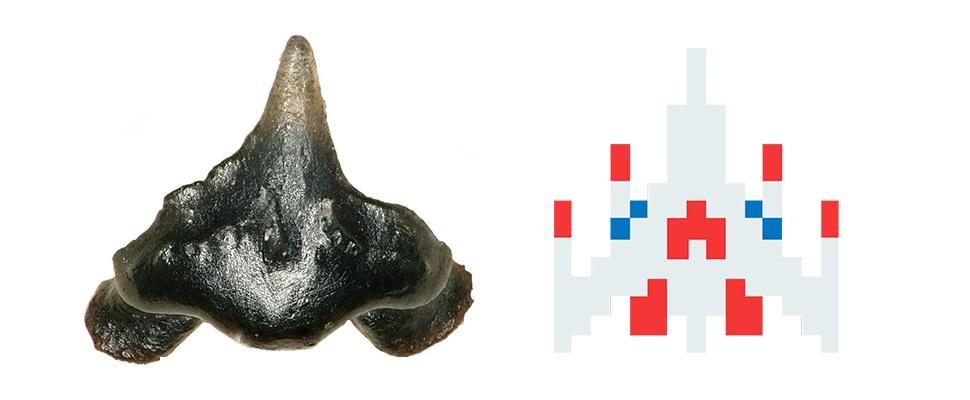 Galagadon-haai vernoemd naar klassieke videogame