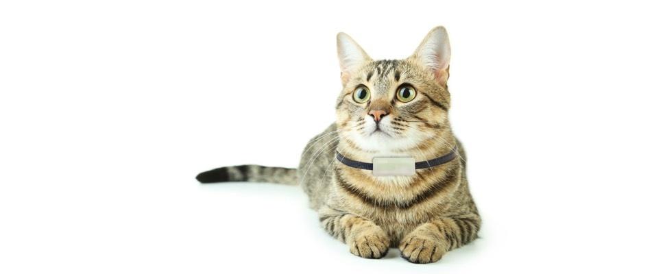 Volg je kat met deze kat-gps